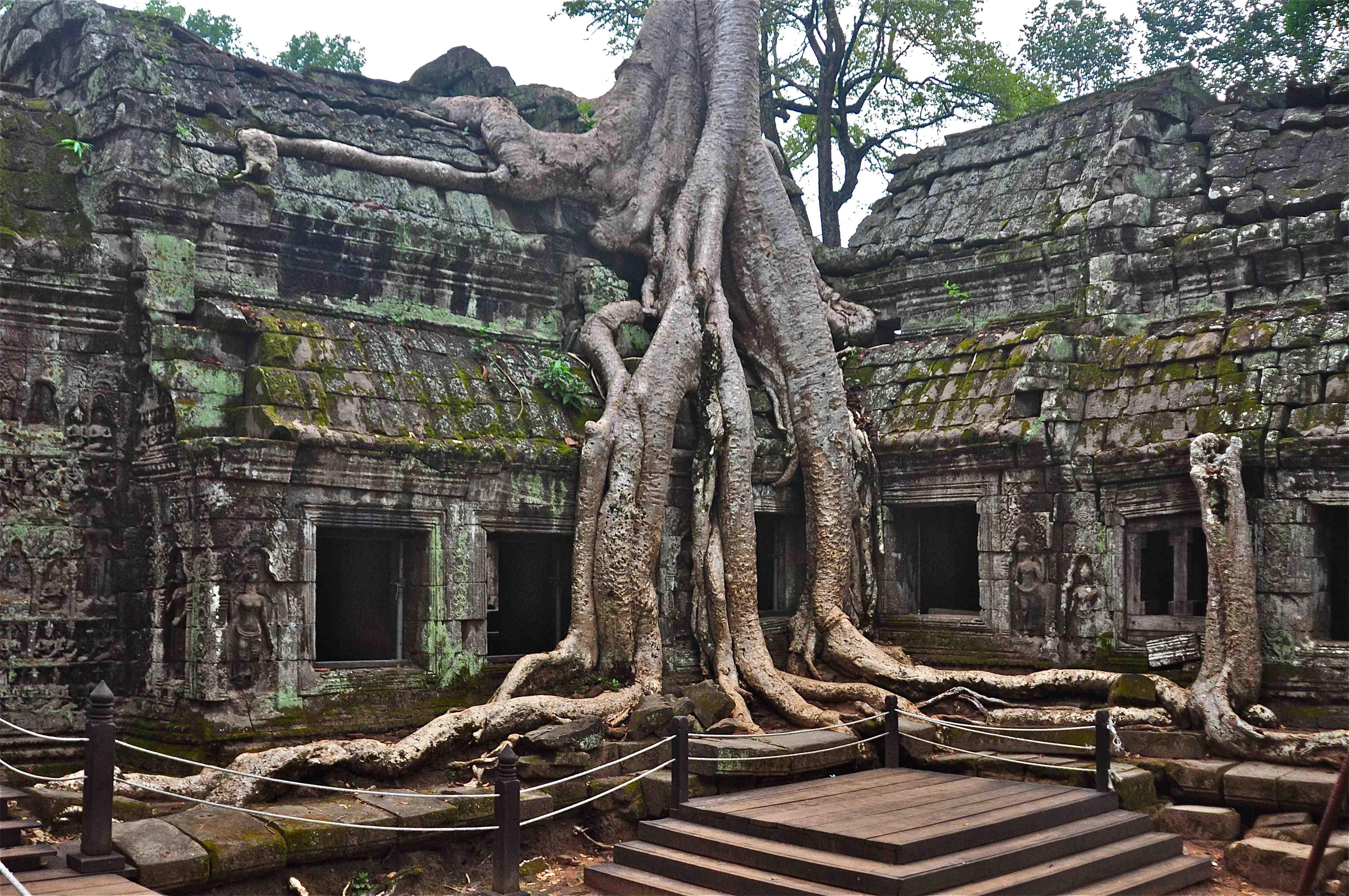 Resultado de imagen de angkor wat tree